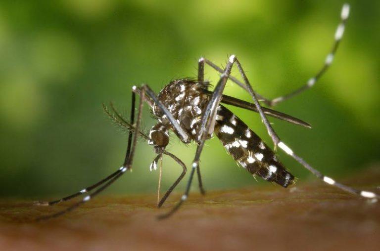 Un système de prédiction de la dengue basé sur l'intelligence artificielle à l'essai en Asie et en Amérique latine