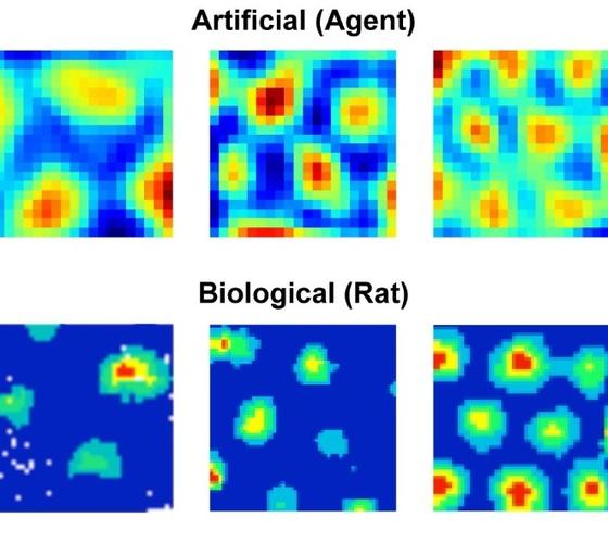 DeepMind créé une IA reproduisant le fonctionnement des cellules humaines en matière d'orientation