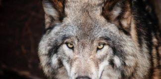 animal-animal-photography-big-682375