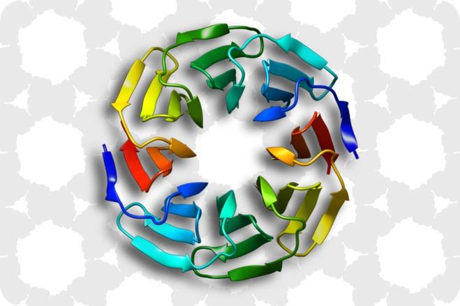 Le MIAT a créé une protéine hyper-stable grâce à ToulBar2, son logiciel d'intelligence artificielle