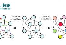 Uliège neuromodulation