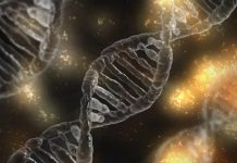 Des chercheurs du St John's College ont mis au point un modèle de langage automatique afin de faire avancer les recherches sur les maladies neurodégénératives.