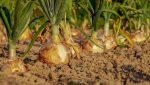 l'UOC souhaite développer des outils pour permettre aux petites entreprises agricoles de prendre les meilleures décisions commerciales