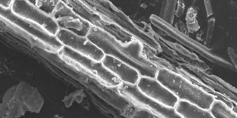 Des chercheurs coréens exploitent le deep learning pour améliorer la microscopie électronique à balayage