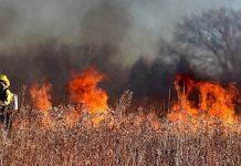 intelligence artificielle feux forêt infrarouge capteurs images données satellites