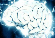 neurosciences recherche comportementale intelligence artificielle équipe projet recherche