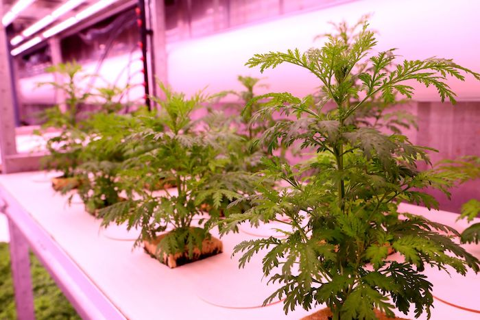 optibiomasse plante
